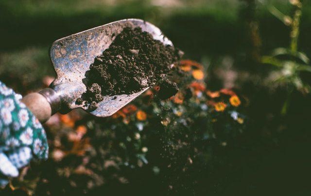 Sägen darüber hinaus Zurechtschneiden: Gartenarbeit wie Anti-Empörung-Informationsträger