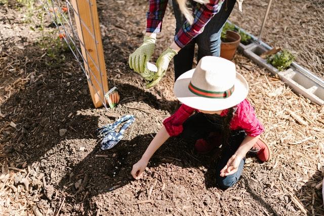 Dein eigener essbarer Garten